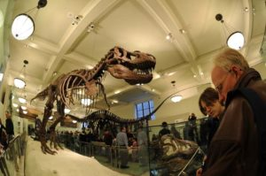 Natural History Museum in New York