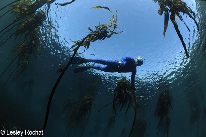 Freediving Bliss in the Atlantic Ocean