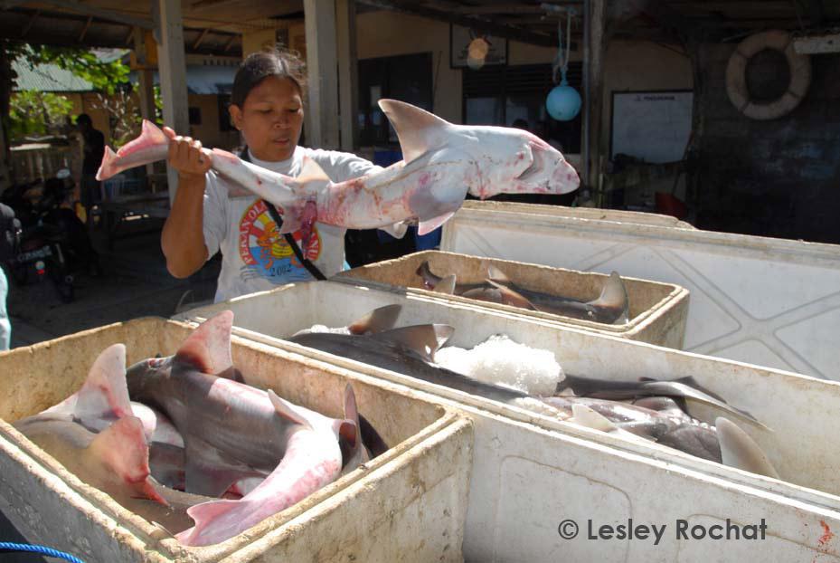 Lesley Rochat Photography - Bali Shark catch