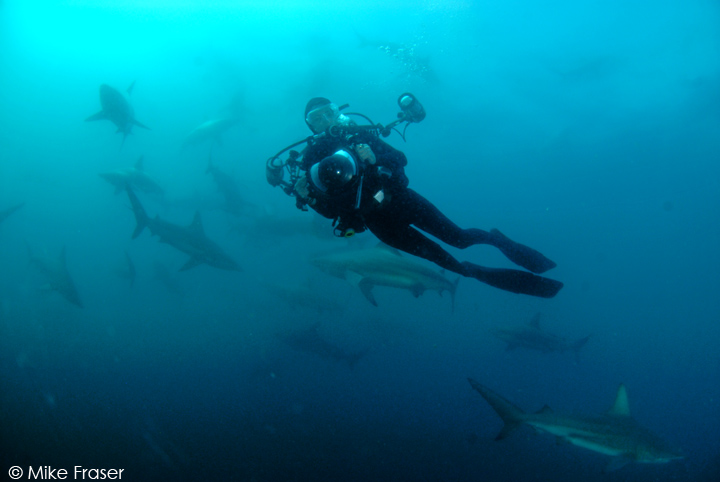 Lesley Rochat diving with Blacktip Sharks