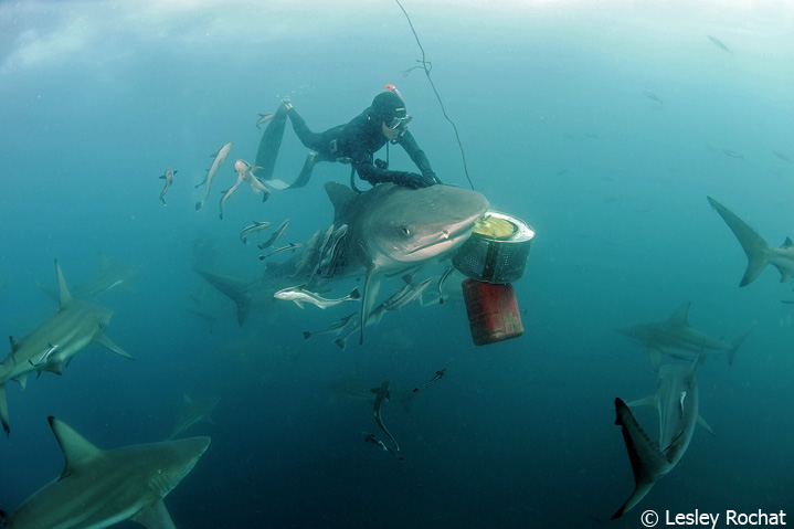 Wolfgang Leander with shark