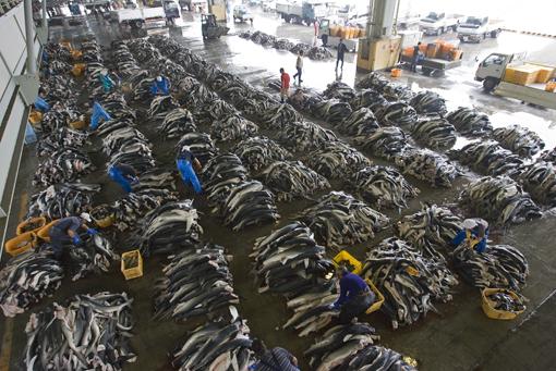 The Horror of Japan's Shark Fin Capital