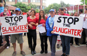 Dolphin Slaughter Protest