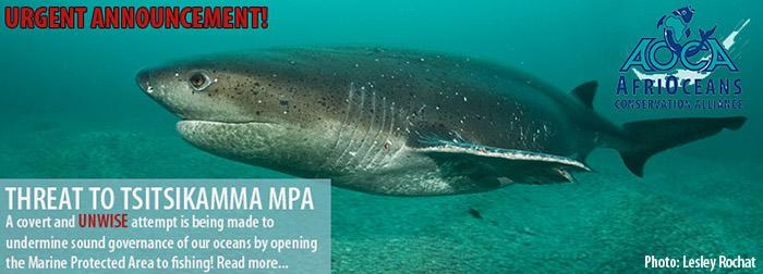 Tsitsikamma MPA Under Threat