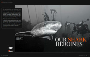 Lesley Rochat is shark heroine - Ocean Geographic Magazine