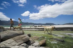 Lesley Rochat Photography - beach