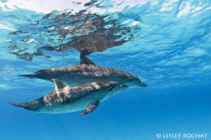 Lesley Rochat Photography - Bahamas Dolphins