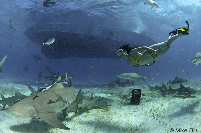 Lesley Rochat Swimming with Sharks