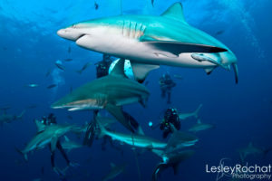 Lesley Rochat Photography - What to Wear & Shark Bites