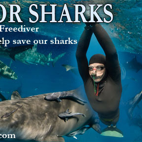 Deep free dive for sharks