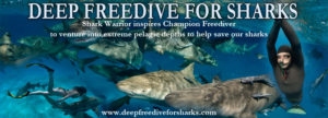 Free dive for sharks