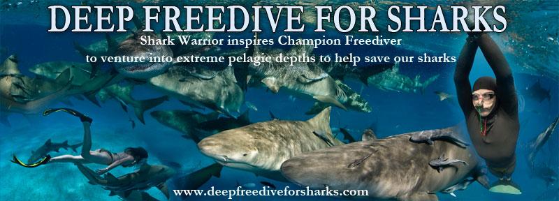 Deep Freedive for Sharks