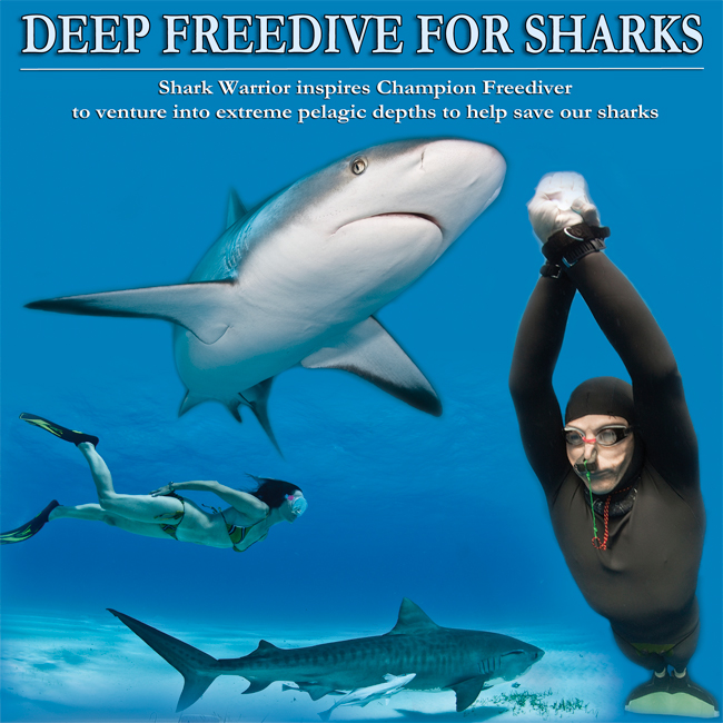 Campaigner: Deep Freedive for Sharks