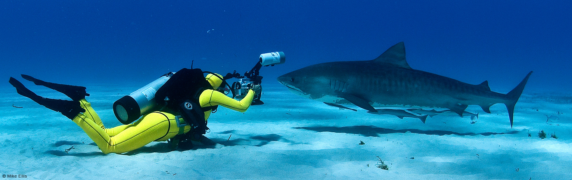 Lesley Rochat Shark Conservationist