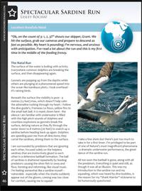 Lesley Rochat sardine run article 2010