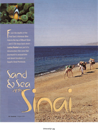Sand and Sea of the Sinai - Lesley Rochat