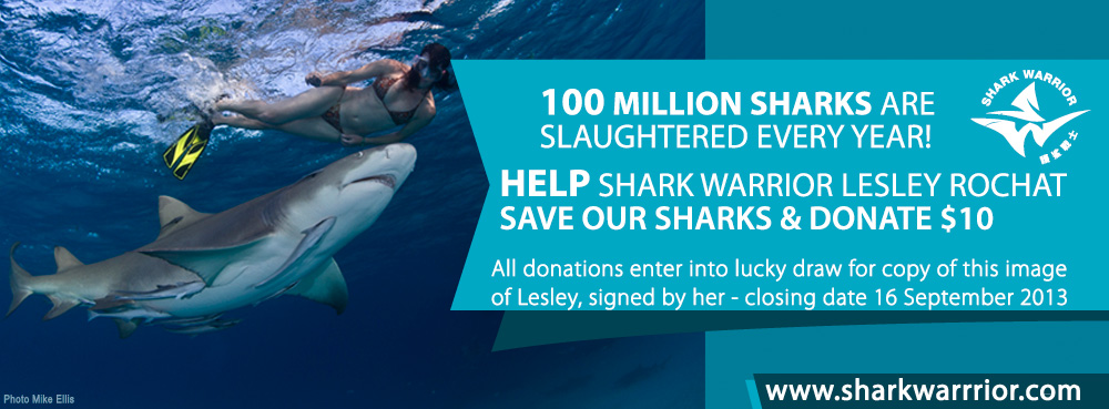 LESLEY-ROCHAT-WITH-SHARK-Donate