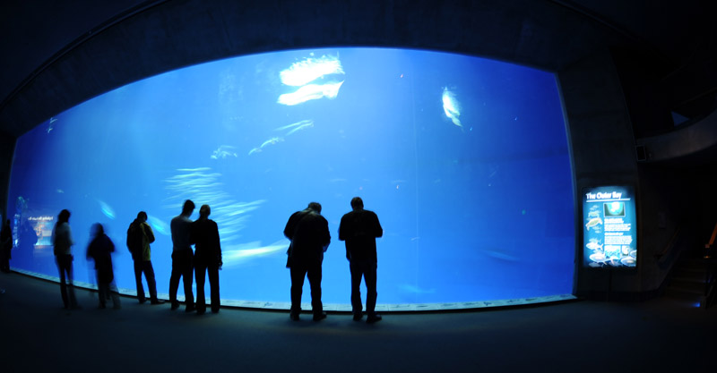 Monterey Bay Aquarium. Photo -Lesley Rochat