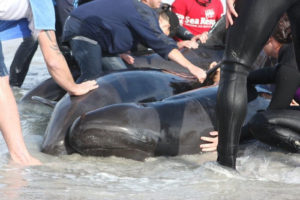 Whales Die and the Oceans Cry