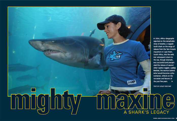 Mighty Maxine, a Shark's Legacy - Africa Geographic Magazine