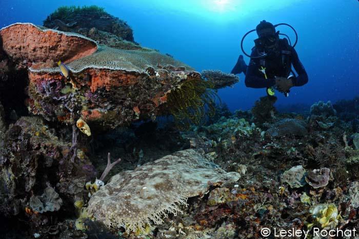 Lesley Rochat Photography - Wobbegong Shark