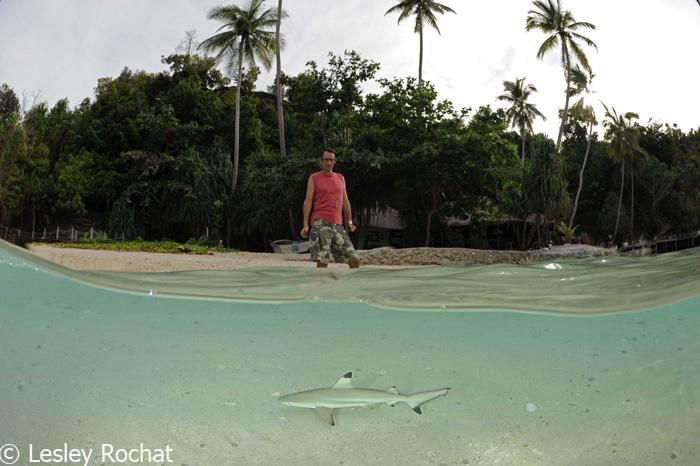Shark Conservation in Radja Ampat