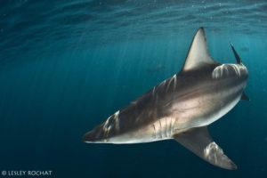 Lesley Rochat Photography - United Against Shark Killing