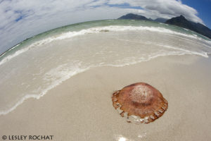 Lesley Rochat Photography - Jelly Fish
