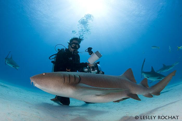 Lesley Rochat Photography - Bahamas Sharks