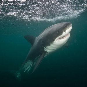 Lesley Rochat Photography Fish Hoek Shark Attack