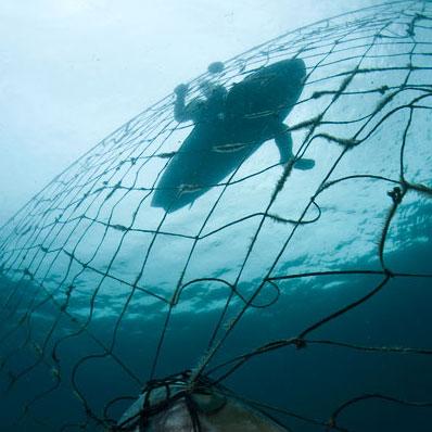 Lesley Rochat Photography Anti shark net ceremony