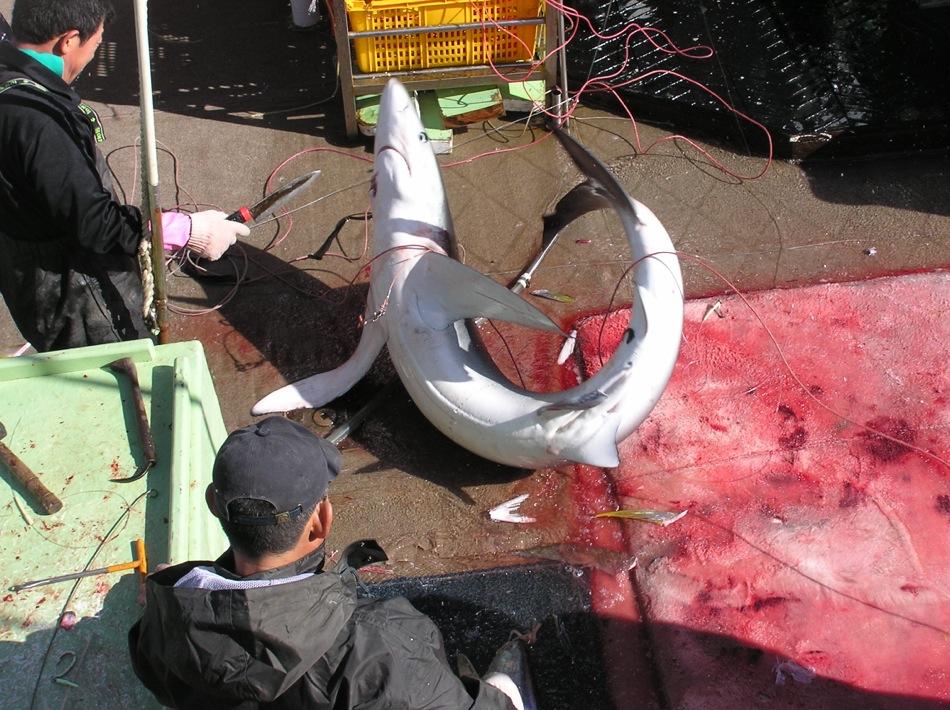 Lesley Rochat - Sharks in Deep Trouble