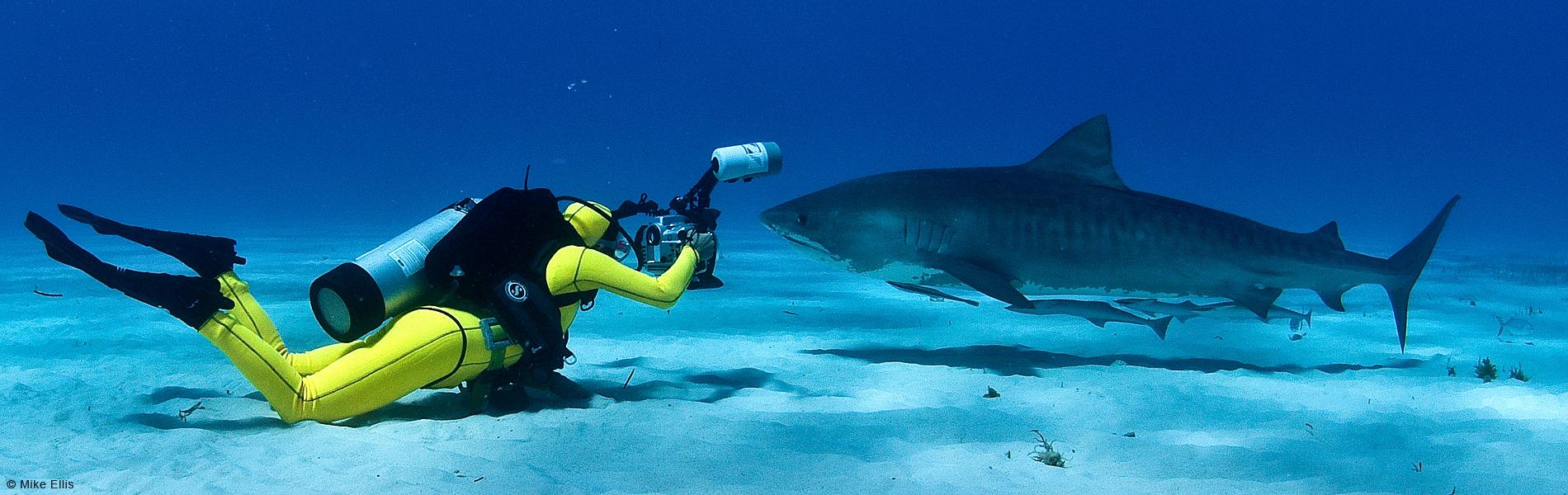 Lesley Rochat Shark Conservationist