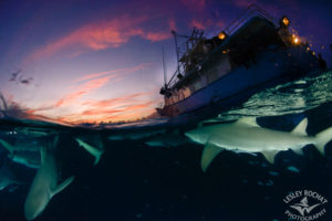 Shark Photography Bahamas