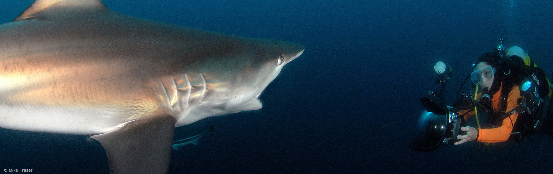Lesley Rochat Shark Warrior