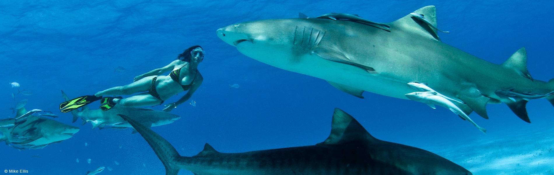 Lesley Rochat Shark Activist