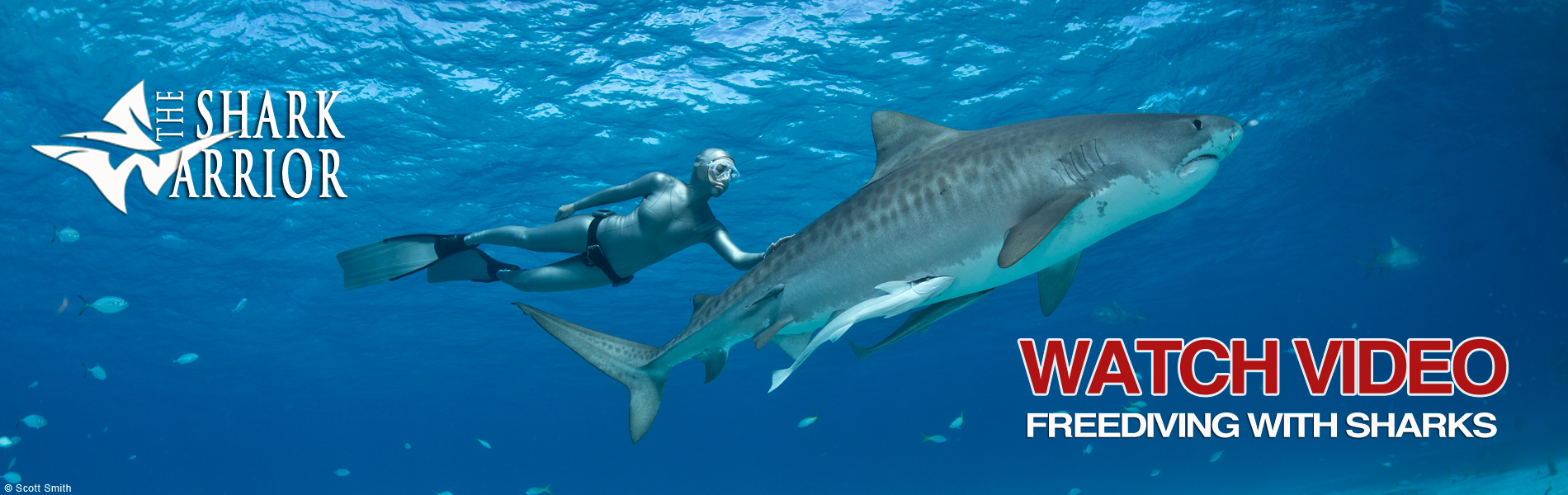 Lesley Rochat Freediving with Sharks